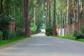 Path on the asphalt road through the pine-trees — Photo