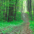 Path in the spring green forest — Stock Photo
