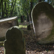 The old Jewish cemetery in Warsaw — Stock Photo