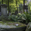 Old graves at historic Jewish cemetery in Warsaw, Poland — Stock Photo #13928853