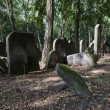 Old graves at historic Jewish cemetery in Warsaw, Poland — Stock Photo #13928975