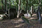 Old graves at historic Jewish cemetery in Warsaw, Poland — Stock Photo