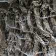 Tree bark texture with spider web  — Stock Photo