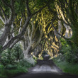 Stock Photo: The Dark Hedges, N. Ireland