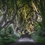 The Dark Hedges, N. Ireland — Stock Photo