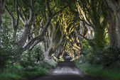 The Dark Hedges, N. Ireland — 图库照片