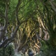 Stock Photo: The Dark Hedges, North Irland