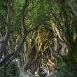 The Dark Hedges, North Irland — Stock Photo