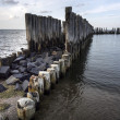 Old wooden stakes in the Baltic sea — Stock Photo