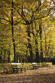 Row of benches in a beautiful autumn park Lazienki Krolewskie in — Stock Photo