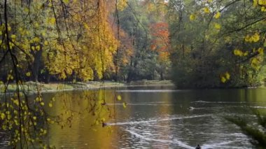 Autumn view of Lazienki Krolewskie park in Warsaw, Poland at sunny weather — Stock Video