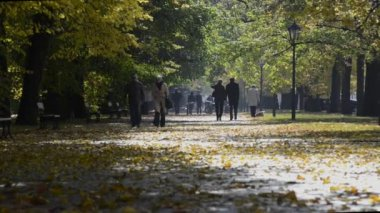 Undefined tourists walking in Lazienki Park during autumn sunny day — Stock Video