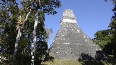 Ancient Tikal maya site in tropical jungle, Guatemala — Stock Video