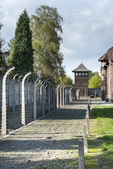 Outdoor Walkway Lined With Electrified Barbed Wire in Auschwitz Camp II — Foto Stock