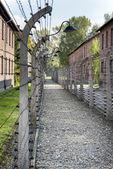 Gang van geëlektrificeerde prikkeldraad in auschwitz ii-birkenau vernietigingskamp — Stockfoto