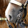 Bridle bit — Stock Photo #31396837