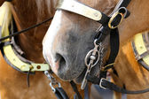 Bridle bit — Stock Photo
