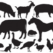 Farm Animals vector — Stock Vector