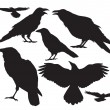 Crow bird vector silhouette set — Cтоковый вектор