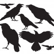 Crow bird vector silhouette set - Stock Vector