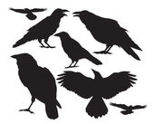 Crow bird vector silhouette set — Stock Vector