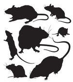 Rats vector — Stock Vector