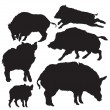Wild boar vector — Stock Vector