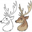 Head of red deer vector — Stock Vector