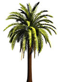 3D Palm tree — Foto Stock