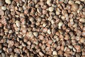 Dried beetle nuts — Stock Photo