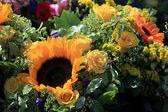 Sunflowers — Foto de Stock