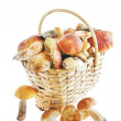 Mushrooms in a basket over white background — Stock Photo #12785324