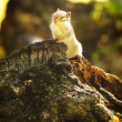 Chipmunk on the stump — Stockfoto