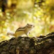 Chipmunk on the tree - Stock Photo
