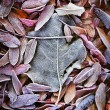 Background of fall dead leaves — Stock Photo