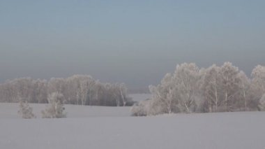 Winter panoramic landscape with snow covered forest — Stock Video