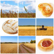 Harvest of wheat. Cereal concept — Stock Photo