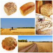 Yellow grain field and bread collage — Stock Photo