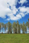 Paisaje de verano con nubes y fila de abedules sobre una colina — Foto de Stock