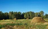 Sommar landskap med höstackar på en äng i trä — Stockfoto