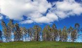 Breite sommerlandschaft mit wolken und zeile der birken über einen hügel — Stockfoto