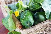 Fresh green cucumbers in a basket — Stock Photo