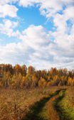 Dirt road goes through an autumn field — Stock Photo