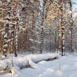 Landscape in the winter cold forest — Stock Photo