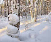 Landscape in the winter cold forest — Stok fotoğraf