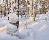 Landscape in the winter cold forest — ストック写真