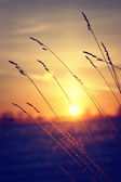 Dry grass against cold winter sunrise — Stock Photo