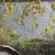 Autumn landscape at the riverbank — Stock Video