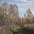 Stock Video: Landscape in autumn forest
