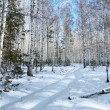 Snowy road in a winter birch woods — Stock Photo
